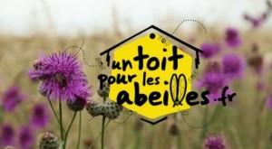 un-toit-pour-les-abeilles-e1358081963764